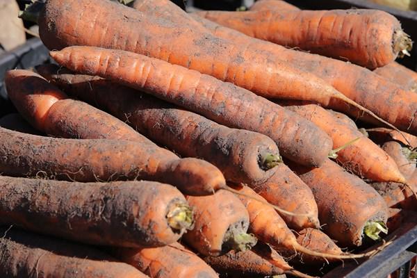 Žalios morkos, tinkamos svorio metimui